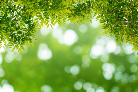 Green leaves with natural bokeh and blurred background.