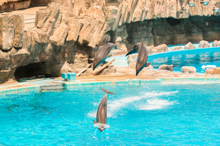bottlenose: A group show of bottlenose dolphins performing a jump over water.