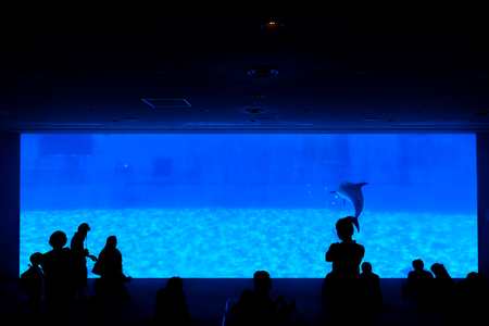 Silhouette of people looking for showing of dolphin from dark room.