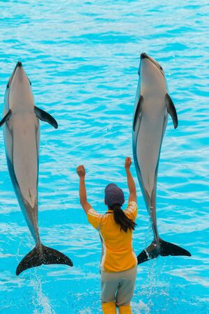 in unison: NAGOYA, JAPAN - JUNE 18 2016: Aquarium and  Museum, located in Port of Nagoya, An unidentified woman trainer is showing dolphins as they perform tricks in front of happy crowds.