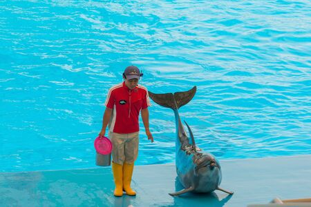 in unison: NAGOYA, JAPAN - JUNE 18 2016: Aquarium and  Museum, located in Port of Nagoya, An unidentified man trainer is showing dolphins as they perform tricks in front of happy crowds.
