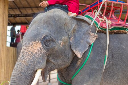 Elephant show and pickup tourism for travel in Thailand.