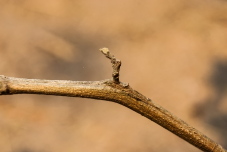 branching: Branching of a Tree.