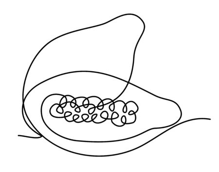 papaya fruit is lying on the table. Hand-drawn image of one continuous line. Vector isolated hand drawn illustration on white background. Healthy diet