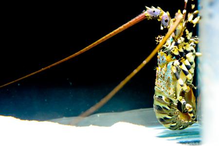 pygoplites diacanthus: fish inside an aquarium tank Stock Photo