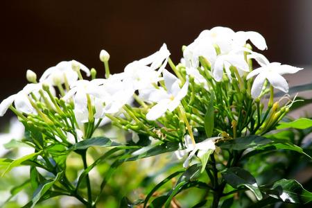 garniture: Beautiful Natural Flower