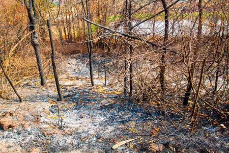 bushfire: Natural Forest fires. Stock Photo