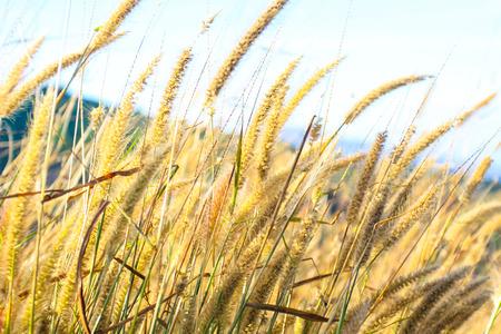 Natural land of Artificial grass