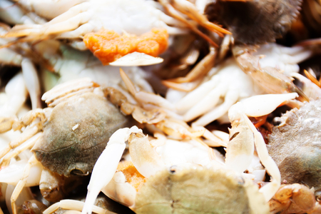 blue swimmer crab: Flower crab, Blue crab, Blue swimmer crab, horse crab, Sand crab Stock Photo