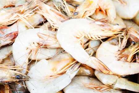 Litopenaeus vannamei, Pacific white Shrimp, White Leg shrimp Stock Photo