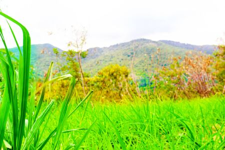 Natural scenery of green grass front of mountain view Stock Photo
