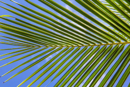 cycadaceae: Part of palm tree Stock Photo