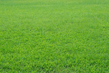 green grass. natural background texture.artificial Grass green Stock Photo