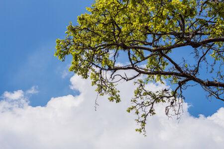 Tree of Salween photo