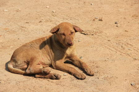 dirty: dirty dog on the sand