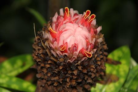 bromeliad: Bromeliad flower Stock Photo