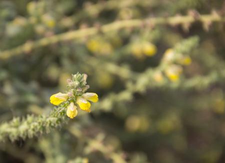 wayside: wayside flower