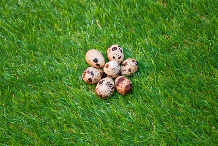 Eggs on grass photo