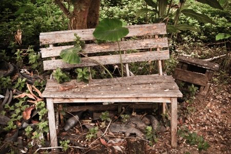 Old wood garden Bench, Stock Photo