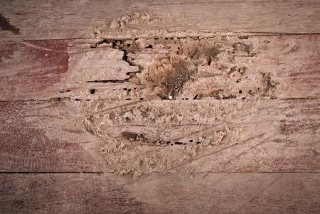 drywood: Termites eat wood floor
