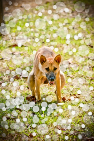 stoop: dog