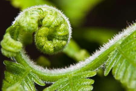 Top of fern macro photo