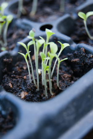germination: Germination germination tray