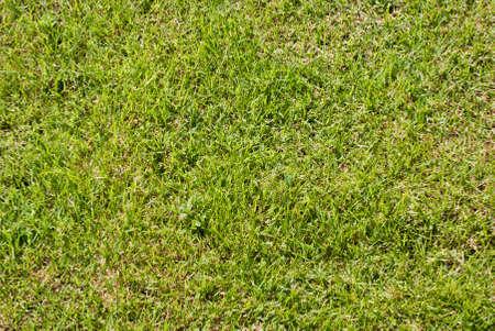 grassy plot: Green lawn