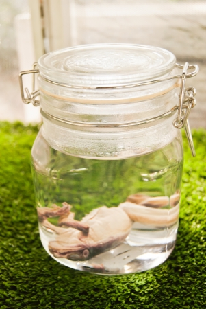 Pickled Frog in a Jar photo