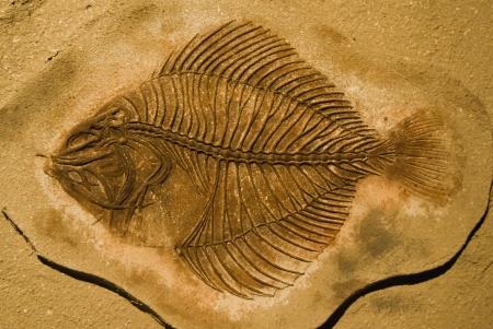 fish fossils photo