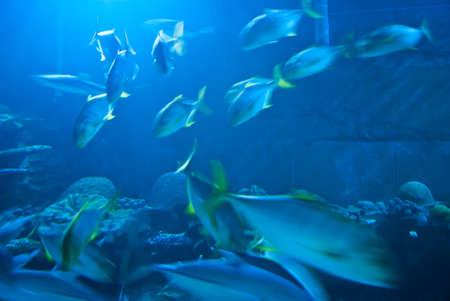 aquarium photo