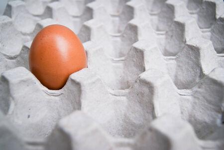 the last egg photo