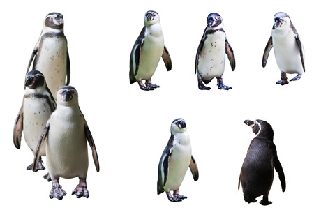 The Penguin Stock Photo