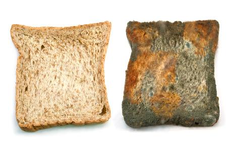 かびの生えたパン