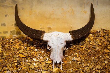 Buffalo horn Stock Photo