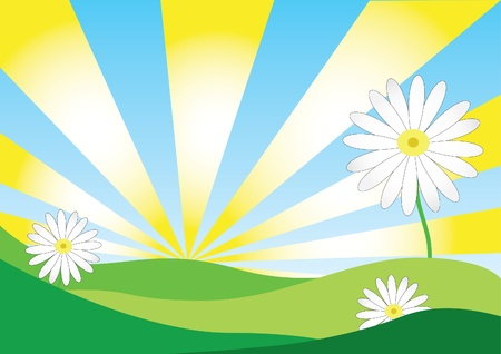 Daisy Background Stock Vector - 9935825