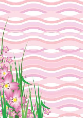 Cherry Blossom Background Stock Photo - 13011865