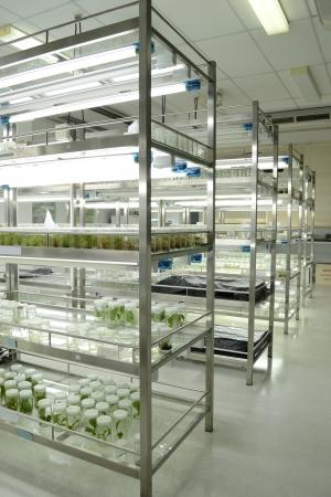 Expérience de culture de tissus végétaux en laboratoire Banque d'images - 15122324