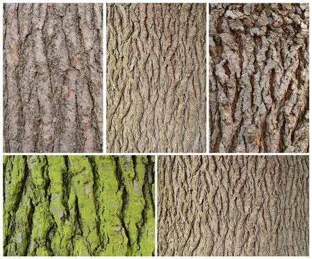 five frames of wodd bark pattern texture background Stock Photo - 16573100