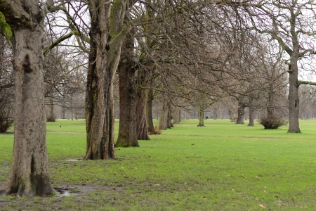 royal park: Tree with no leaves in the garden