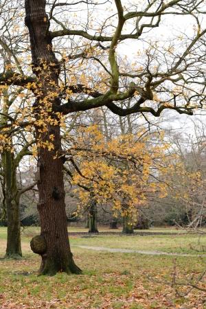 Tree in the garden in the late of autumn season Stock Photo