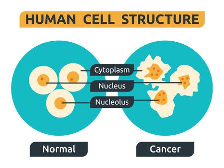 zellen: Illustration der Zellstruktur