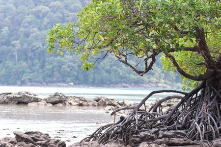 Mangrove forest in the tropical place photo