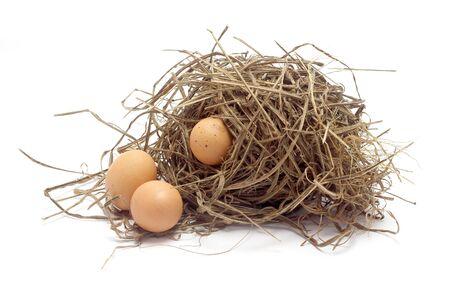 birds nest: tres huevos de gallina en el nido de p�jaro sobre fondo blanco