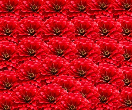 Red flowers background photo