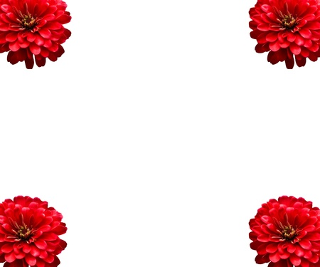 Red Flowers Isolated photo