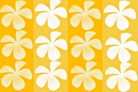 Frangipani flower with orange color background of pattern photo