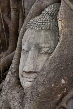 Buddha statue of head in bodhi tree of roots at Wat Phra Mahathat, Ayuthaya photo
