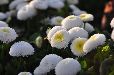 Close up White Flower Stock Photo