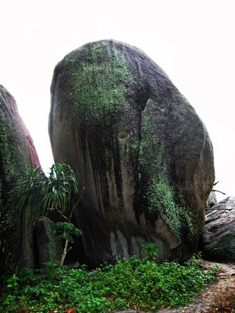 A beautiful nature of a very big stone with small lush plant  Stock Photo